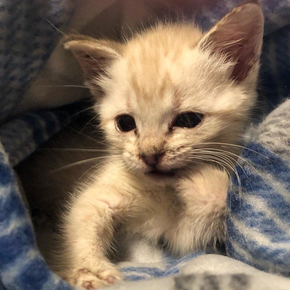 734aa0cbda Kitten die niet kan lopen vindt speciale pleegmoeder - Katten Zijn ...